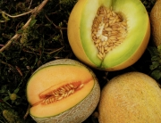 end-of-melons-1