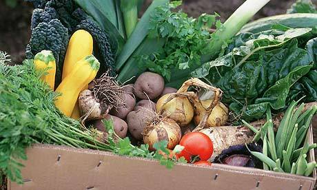 Box-of-organic-vegetables-0012
