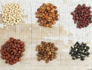 different-type-of-beans
